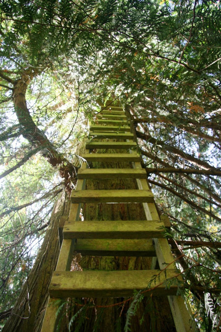 cedar-creek-treehouse-2