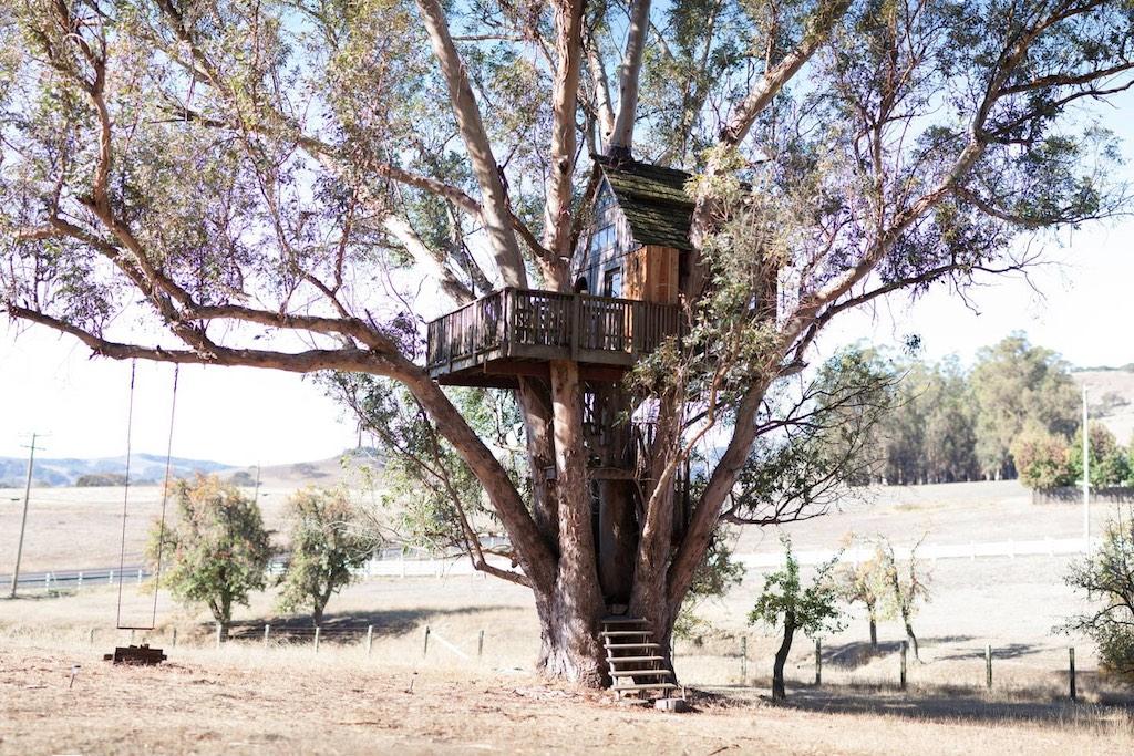 swallowtail-treehouse-1