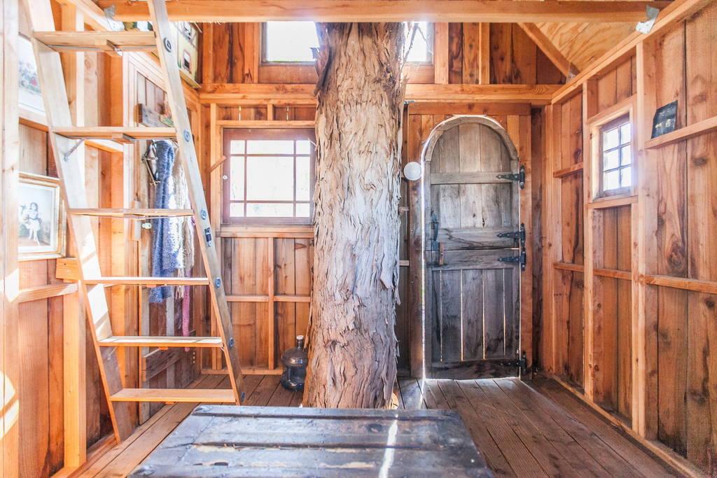 swallowtail-treehouse-4