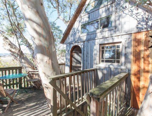 Swallowtail Treehouse